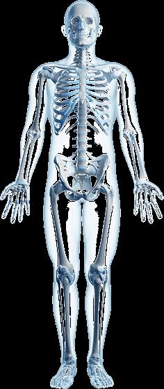 Orthopedic Skeleton The Best and Worst Sho...